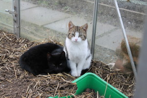 Our kittens love the warm greenhouse.